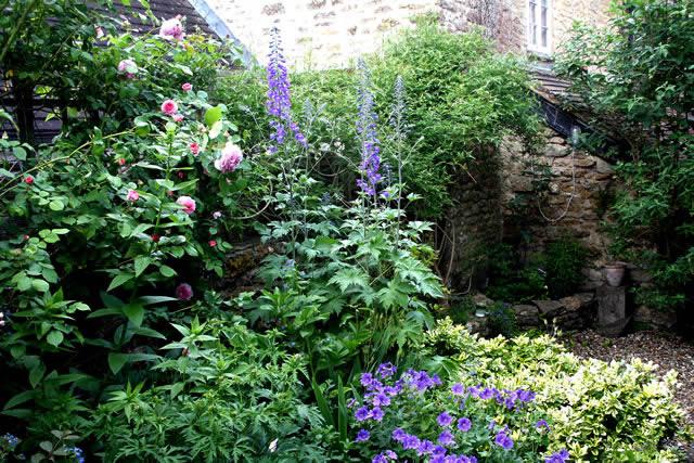Sarah darlington on small gardens for Plants for small gardens