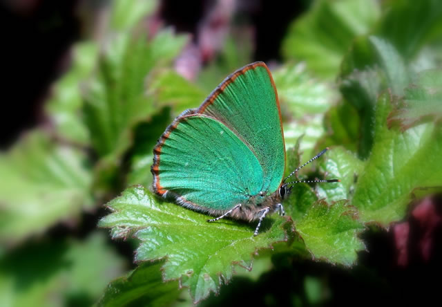 A lovely green... butterfly?