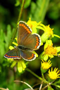 Brilliant Butterfly Images from Carymoor