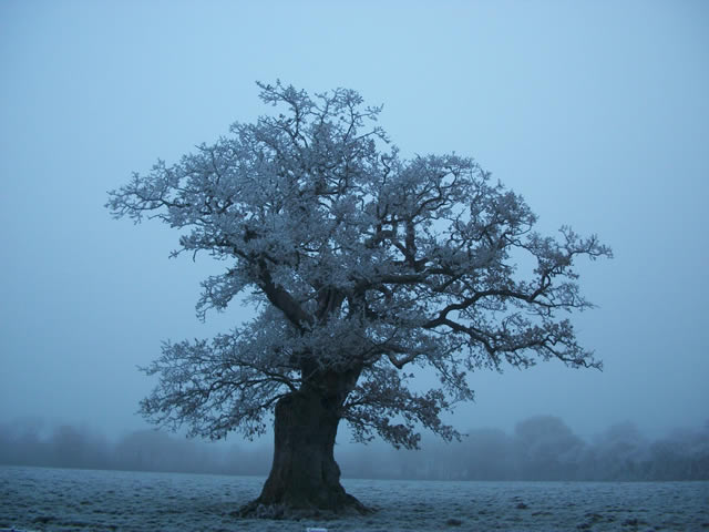 http://www.wincantonwindow.co.uk/assets/images/blog/2011-07/808/808_7_tree-amongst-the-mist.jpg