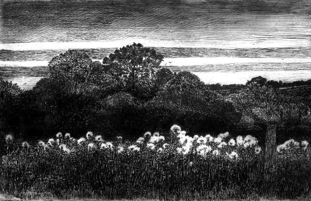 Thistledown - Etching by Professor Will Vaughan