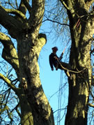 What's an Arboriculturist? Jonathan Astill Aims to Shed Some Light