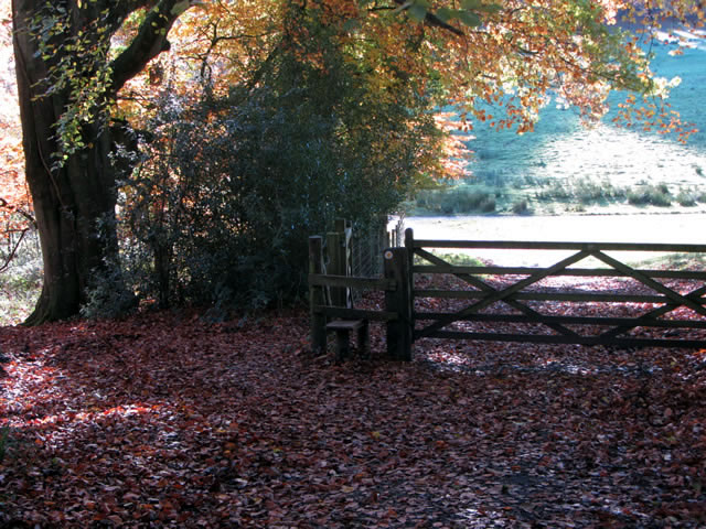 Autumn leaves under a tree, near a gate and style