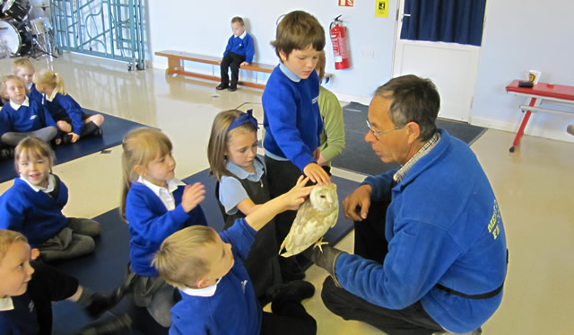 Mere Falconry visits Wincanton Primary School