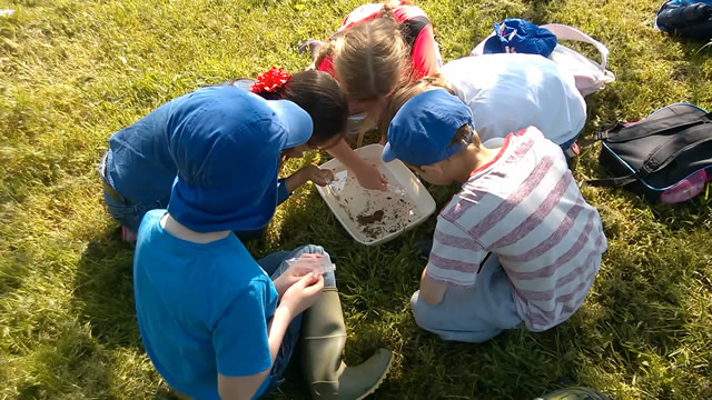 Searching for Mayfly eggs