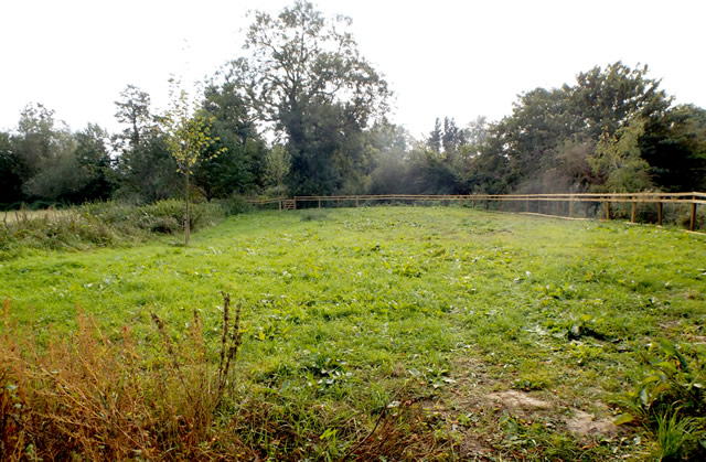 Cale Park wild flower meadow site