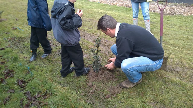 The planting of a holly sapling last year in the play area