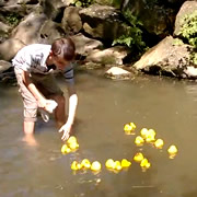 Wincanton's Annual Duck Race