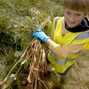 C.A.T.C.H. Action Day on Sunday 19th July – Balsam Bashing