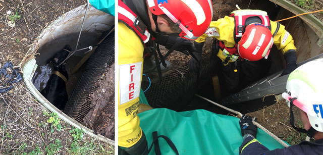 Trapped cow rescued by firemen