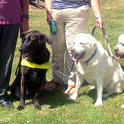 Sponsored Swim for Guide Dogs for the Blind Association