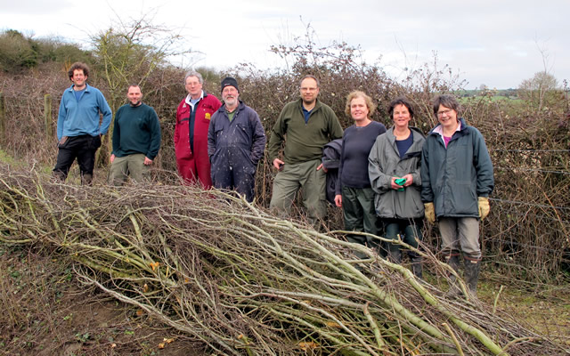 Hedgelaying at Carymoor Environment Centre