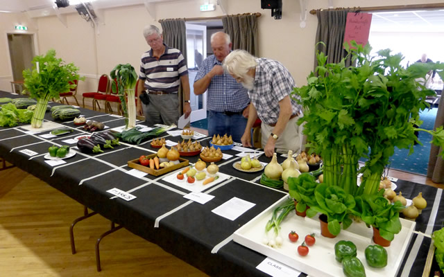 Judging the vegetables at Wincanton Flower Show 2016