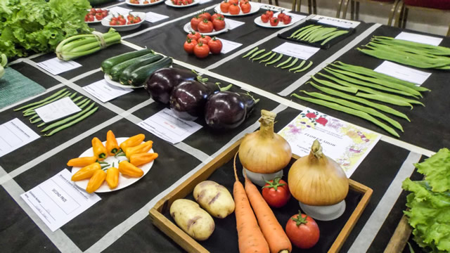 Vegetable exhibitions at Wincanton Flower Show
