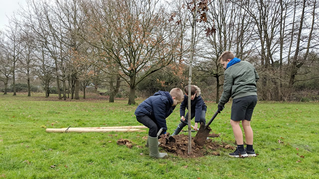 Wincanton Primary School pupils planting a tree at Wincanton's Cale Park recreationg round