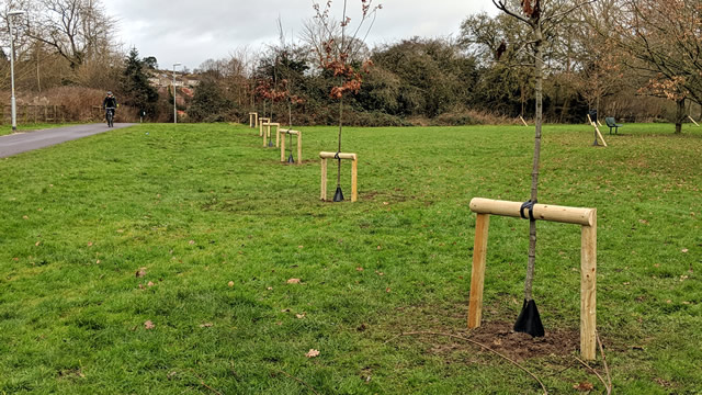 The completed line of new trees planted at Wincanton's Cale Park recreation ground