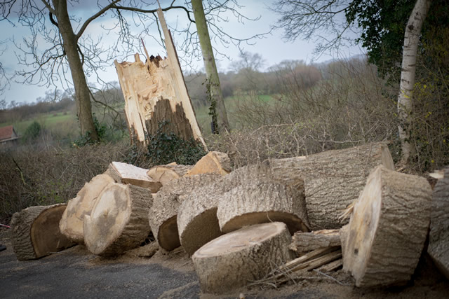 The tree felled by strong wind at Wincanton Community Hospital, chopped into manageable chunks