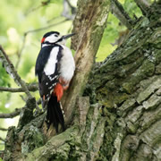 Have you spotted the Cale Park woodpecker? <small style='color: blue;'>VIDEO</small>